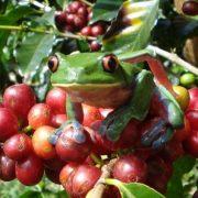 dota-coffee2