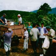 costa-rica-coffee-direct-from-farmer